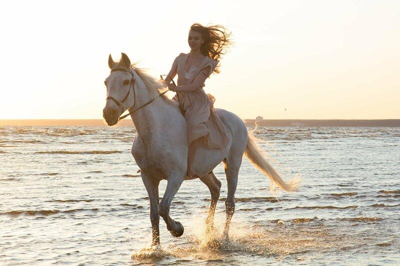 Лошадь, Вожжи, Конный спорт, Уздечка, Жеребец, Отдых, Животных спорт, Большой, Мане, Удовольствие